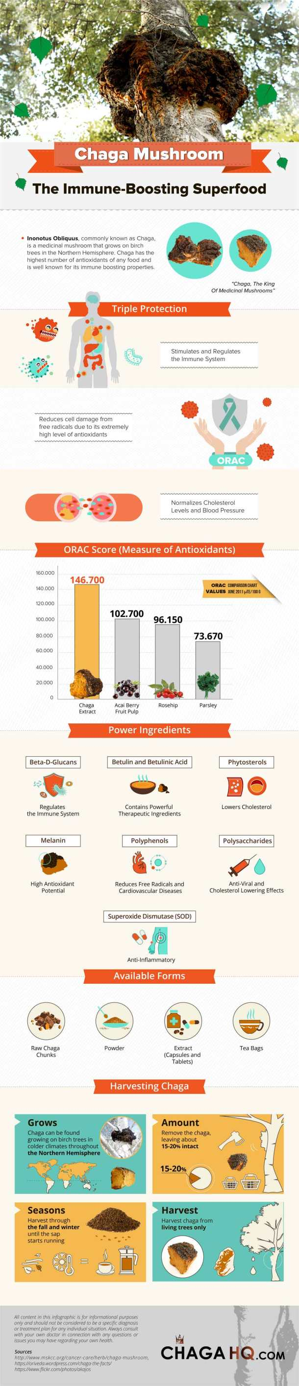 chaga_mushroom_infographic